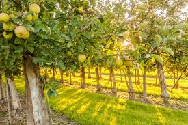how to prepare your land for your own backyard orchard