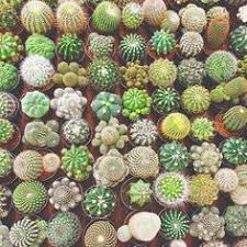 Indoor Cactus Garden Ideas Pin By Ha Ee Weh º On Inspiration Pinterest Cacti