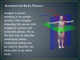 Planes And Anatomical Directions Worksheet Answers Planes Directions And Cavities Understanding Anatomical