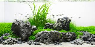 Aquascape Layout Understanding Iwagumi Aquascaping Style The Aquarium Guide
