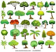 Types Of Trees And Their Names My Web Value