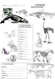 animals skeletons by maytechuna teaching resources tes