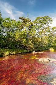 beautifully exotic caño cristales river that u0027ran away from