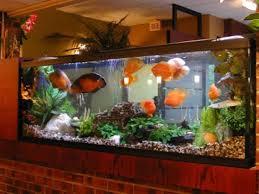 Aquascape Aquarium Designs Ghar360 Home Design Ideas Photos And Floor Plans
