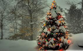christmas tree images christmas tree outside 4k hd desktop wallpaper for 4k ultra hd tv