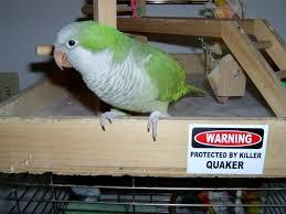 Parrot Meme - killer quaker parrot by ulario on deviantart
