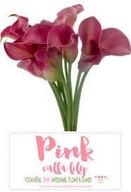 Flowers Information - best 25 pink flower names ideas on pinterest blush flowers