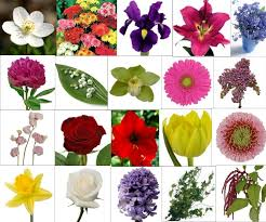 wedding flowers meaning bridal flower meanings what does your favorite flower style
