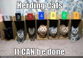 Herding Cats Meme - herding cats it can be done cheezburger funny memes funny