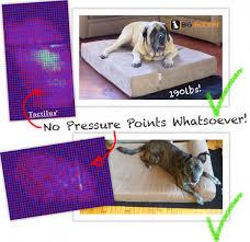 Barker Dog Bed Charlotte Tries Out The Big Barker Orthopedic Dog Bed