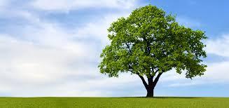 the tree victor a leonard