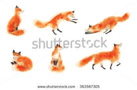 sleeping red fox wallpapers fox stock images royalty free images u0026 vectors shutterstock
