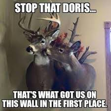 Funny Deer Hunting Memes - a dixie lady deer hunter stop that hunting signs pinterest