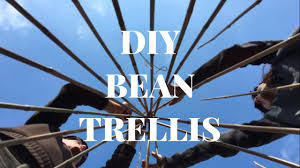 how to create a bamboo cane wigwam trellis for beans youtube