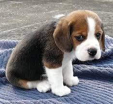 Sad Meme Generator - pics of a sad puppy impremedia net