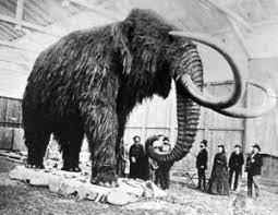cryptomundo mammoth megafauna mammal massacre