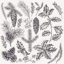 vector set with christmas plants botanical illustration branch