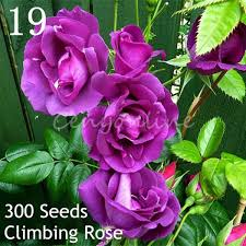 multifarious ornamental grow up flower u0026 plants seeds garden for