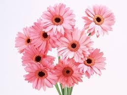 Flower Com World U0027s Top 100 Beautiful Flowers Images Wallpaper Photos Free