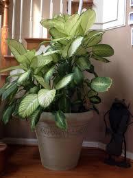 house plants no light best 25 tropical house plants ideas on pinterest flowering