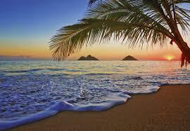 wallpops ideal decor pacific sunrise 12 x 100 default name