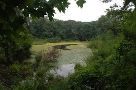 New York forest images Forest park images nyc parks jpg