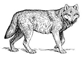 free printable wolf coloring pages picture coloring free printable