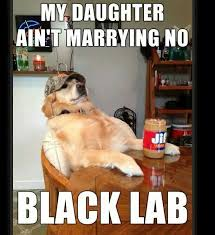 Black Lab Meme - my daughter ain t marrying no black lab black lab memes