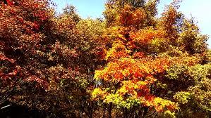 england peak fall colors close trees england