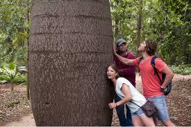 australian native food plants adelaide full day aboriginal cultural experience tour aboriginal
