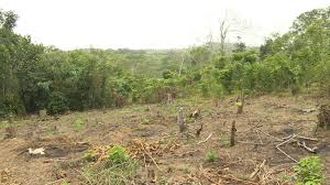forests november 2017 browse articles to feed a growing population farms chew away at madagascar s forests