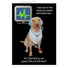Get Well Soon Meme Funny - funny get well cards invitations zazzle co uk