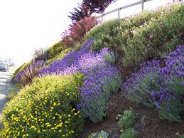 images about slopes on pinterest retaining walls hillside drought