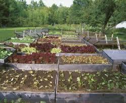 lessons from a restaurant garden vegetable gardener