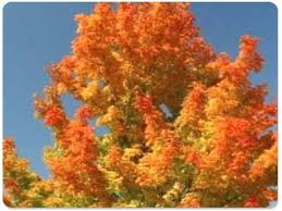 beautiful fall thanksgiving screensaver standaloneinstaller