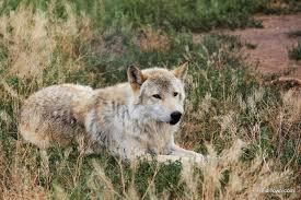 Colorado wild animals images A walk on the wild side in pagosa springs colorado 49892
