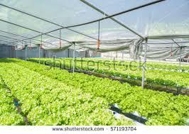 organic hydroponic vegetable garden stock photo 108292739