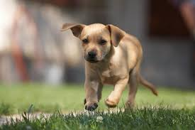 what do dogs symbolize in dreams exemplore