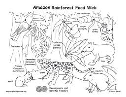 rainforest food chain rainforest lovely food chain coloring