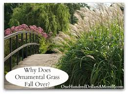 why does ornamental grass fall one hundred dollars a month