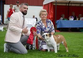 affenpinscher uppf are wästmanland kennelklubb internationell hundutställning 2017