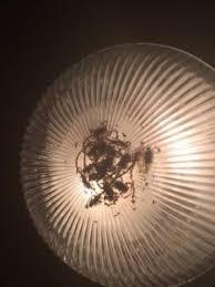 Light Fixture Problems Big Scorpion Problems Az Responsible Pest Mesa