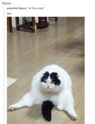 Funny Cat Lady Memes - sit like a lady