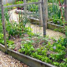 south central gardening what crops to grow in oklahoma and texas