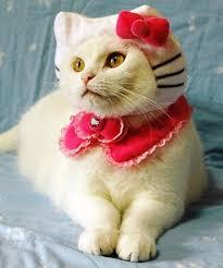 Kitten Halloween Costumes Pet 10 Halloween Costumes Cats Images Animals