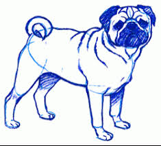 exam guide online how to draw a pug