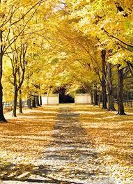 autumn photography yellow decor fall leaves bucks county farm