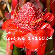 Red Ginger Flower - compare prices on red ginger flower online shopping buy low price