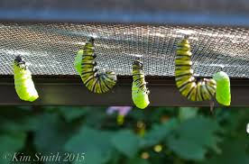 what would happen if you prevent a caterpillar from building its
