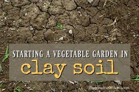 starting a vegetable garden in clay soil preparednessmama